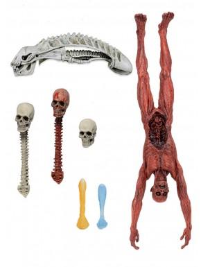 Pack de trofeos deluxe Predator Neca