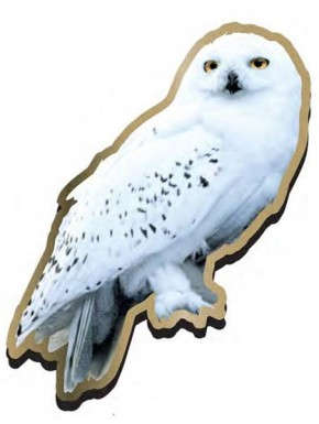 Pin Harry Potter Hedwig