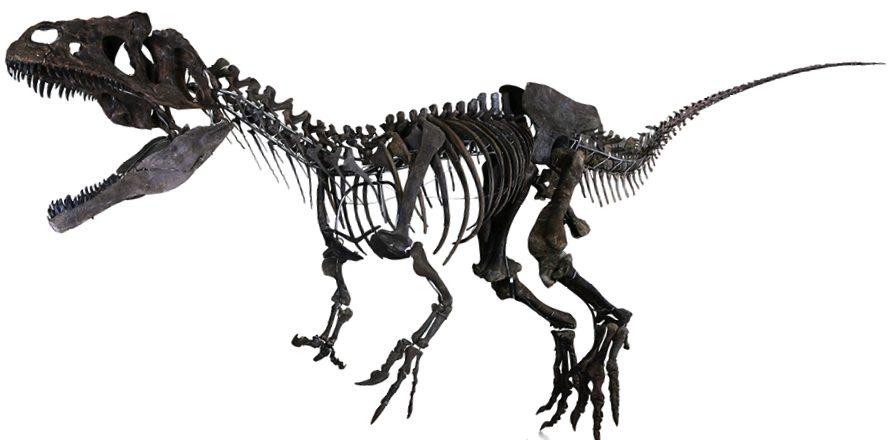 Quieres Ponerle Tu Nombre A Un Dinosaurio Blog La Frikileria Los nombres de los dinosaurios han sido otorgados por los científicos a los diferentes grupos de algunos ejemplos de dinosaurios que llevan el nombre del lugar en el que fueron encontrados son. la frikileria