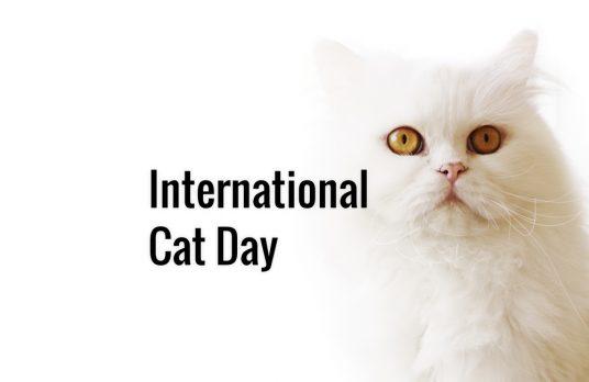 Qué tiene internet con los gatos